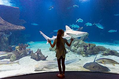 Caucasian girl admiring fish in aquarium - p555m1414226 by Marc Romanelli