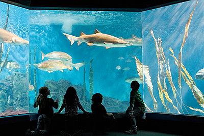 Children watching fish in aquarium - p9243226f by Image Source