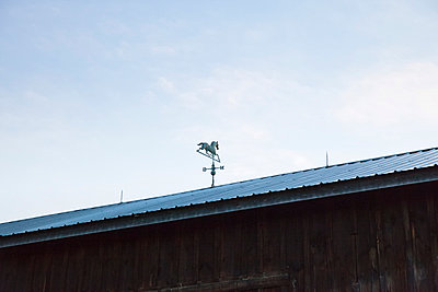 Horse vane on barn  - p956m1044310 by Anna Quinn