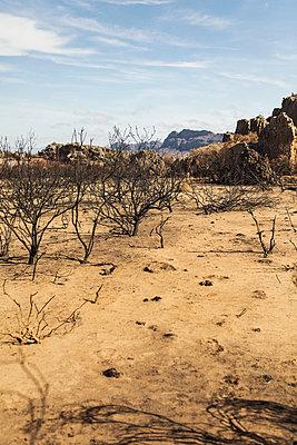 South africa - p1477m1586411 by rainandsalt