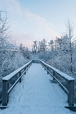Winter - p1507m2044542 by Emma Grann