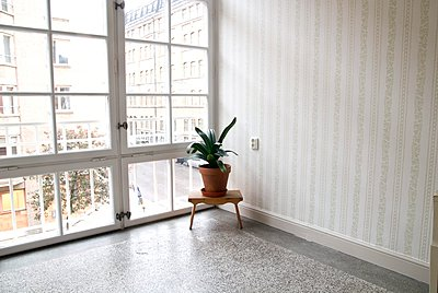Houseplant at the corner of the room beside window, Sweden - p348m915644 by Inger Bladh