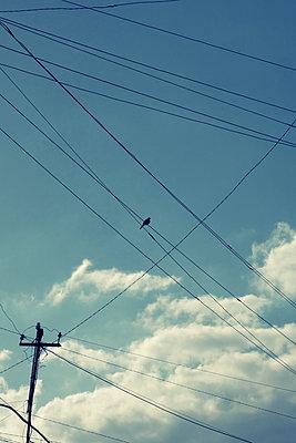Eine Taube auf einer Überlandleitung - p1189m2176196 von Adnan Arnaout