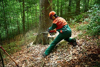 Forestry - p1203m1028420 by Bernd Schumacher