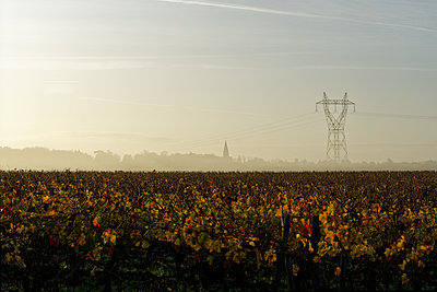 France, Saint-Cyr-en-Bourg, Vineyard - p1402m2222616 by Jerome Paressant
