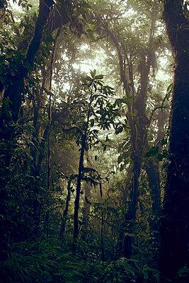 Monteverde Cloud Forest, Costa Rica - p1439m1508038 von Saskia Uppenkamp