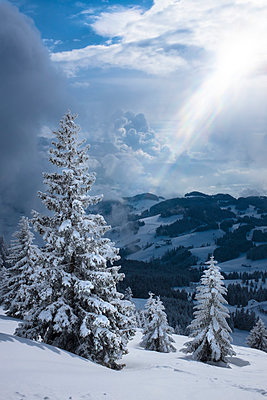 Germany, Bavaria, Chiemgau, Chiemgau Alps, Sachrang, Spitzstein in winter - p300m2080374 by Hans Mitterer