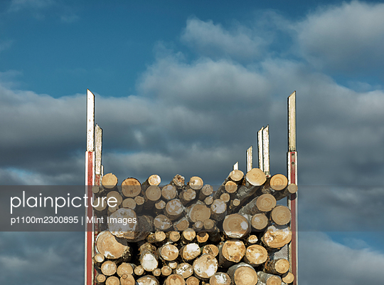 Trailer full of timber, close-up. - p1100m2300895 by Mint Images