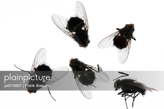 Dead flies - p4010607 by Frank Baquet