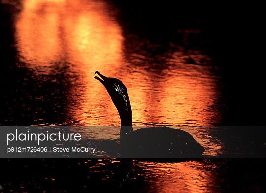 p912m726406 von Steve McCurry