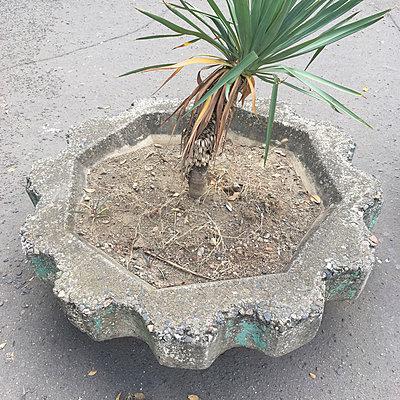 Palme - p1401m2038549 von Jens Goldbeck