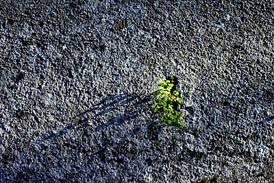 Zähes Pflänzchen - p7190171 von Rudi Sebastian