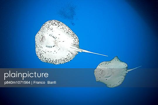 p840m1071564 von Franco Banfi