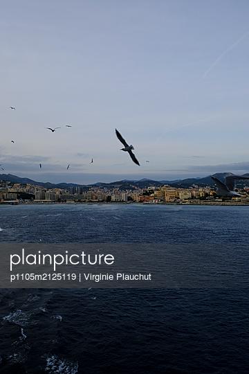 Seagulls in flight - p1105m2125119 by Virginie Plauchut