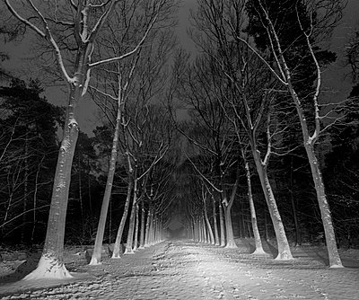 Forest road at night - p1132m1017010 by Mischa Keijser