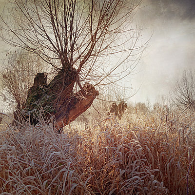 So Cold (Warm Version) - p1633m2209011 by Bernd Webler