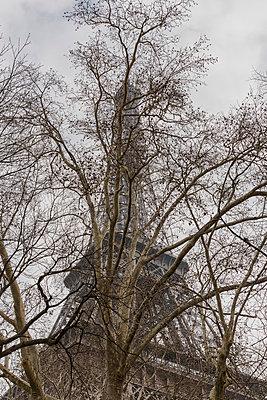 Bare tree and Eiffel Tower, Paris, France - p429m803070f by Oscar Bjarnason