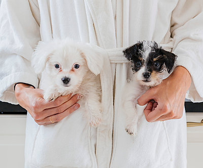 Caucasian woman wearing bathrobe carrying puppies in pockets - p555m1303279 by Hello Lovely