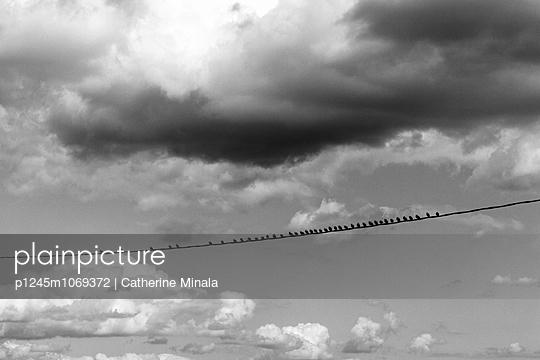 The bird line - p1245m1069372 by Catherine Minala