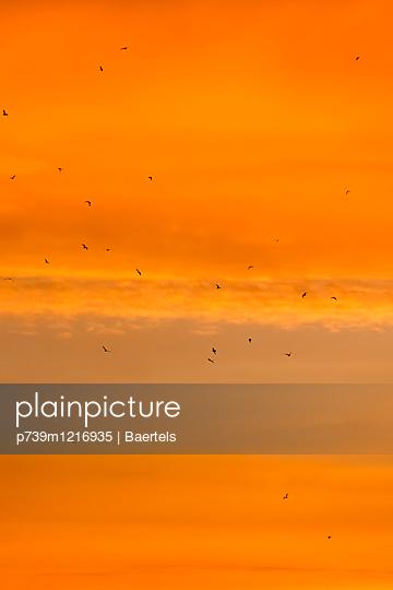 Sonnenaufgang mit Möwenschwarm - p739m1216935 von Baertels