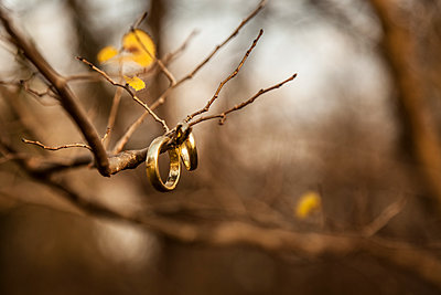 Wedding rings hanging on bare twigs - p300m2060083 by Christina Falkenberg