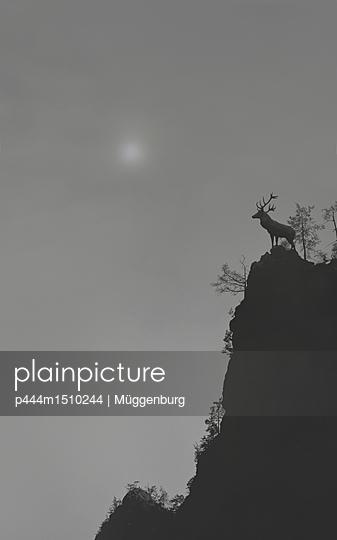 p444m1510244 by Müggenburg