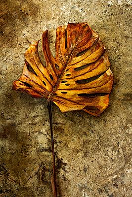 Leaf - p1017m2015403 by Roberto Manzotti