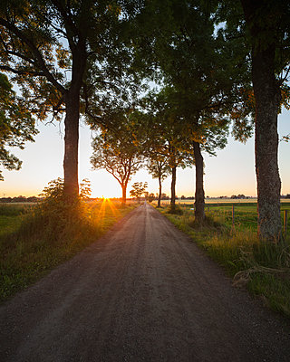 Sweden, Skane, Slogstorp, Ash trees and country road at sunrise - p352m1142139 by Gustaf Emanuelsson