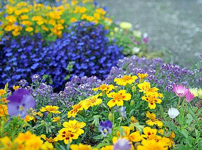 Bunte Gartenblumen - p6060252 von Iris Friedrich