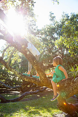 Girls climbing tree in sunlight - p924m1513616 by Kinzie Riehm