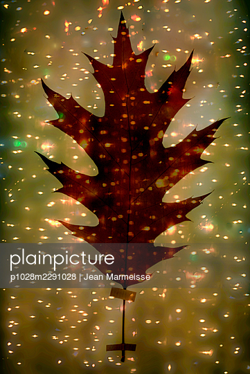 Red oak leaf - p1028m2291028 by Jean Marmeisse