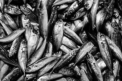 Sardines in black and white - p1065m885854 by KNSY Bande