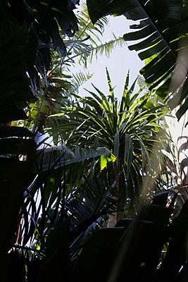 Jungle - p1640m2242076 by Holly & John