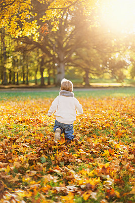 Little boy playing in autumn leaves in Sweden - p352m1536613 by Calle Artmark