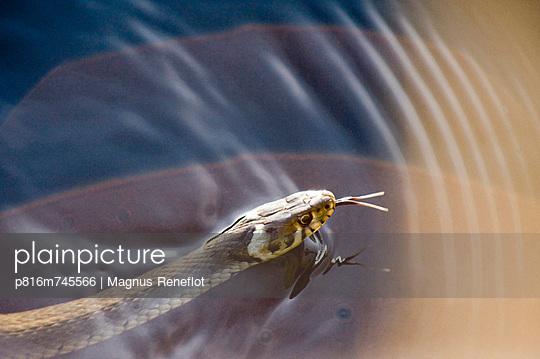p816m745566 von Magnus Reneflot