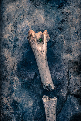 Broken bone - p1228m1128645 by Benjamin Harte