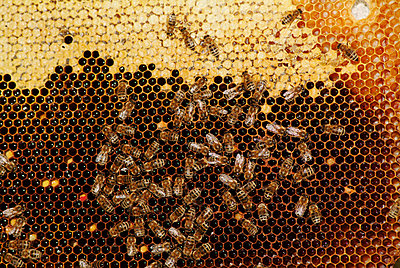 Beehive - p2350540d by KuS