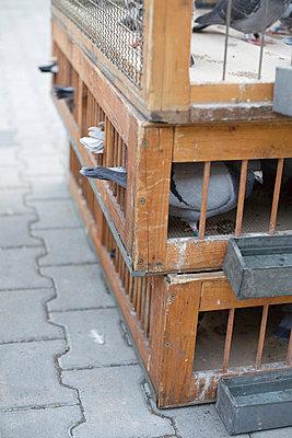 Cage - p26811321 by Jana Kay