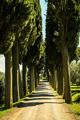 Cypress trees on a lonely countryroad, Montalcino - p968m987208 by roberto pastrovicchio
