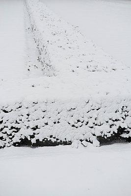 Hecke im Schnee - p1164m1034831 von Uwe Schinkel