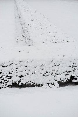 Snowcovered hedge - p1164m1034831 by Uwe Schinkel