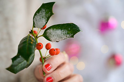 Hand holding holly by Christmas tree - p1427m2254858 by Jamie Atlas