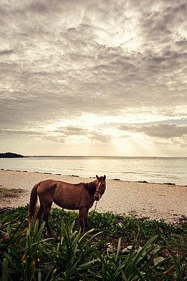 Pferd am Strand - p1515m2053466 von Daniel K.B. Schmidt
