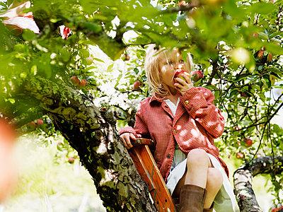 Girl on ladder eating apple, Varmdo, Uppland, Sweden - p312m897195 by Johner