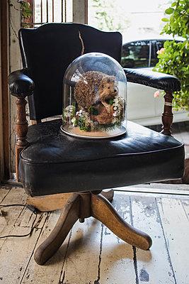 Ausgestopfter Igel unter Glasglocke auf Sessel - p728m2219731 von Peter Nitsch