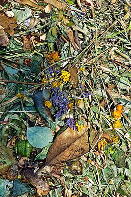 Friedhofs-Abfall - p880m908056 von Claudia Below