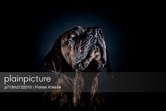 p713m2122310 by Florian Kresse