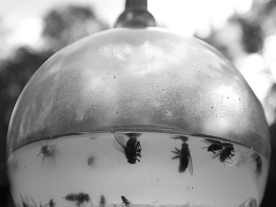 Tote Fliegen - p1521m2064539 von Charlotte Zobel