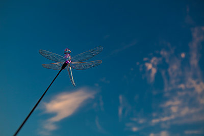 dragonfly - p1553m2141580 by matthieu grospiron