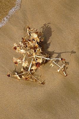 Fundstück am Strand von Les Portes en Re - p982m2128375 von Thomas Herrmann